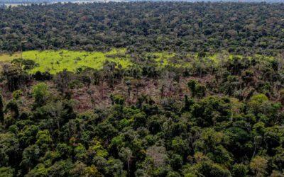 Edital seleciona propostas de automação do processo de responsabilização ambiental